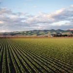 Edital de pesquisa para o desenvolvimento de aplicativos com a finalidade de inovar procedimentos para aumento da produtividade e eficiência do setor agropecuário