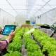 USP seleciona ideias inovadoras para o agronegócio
